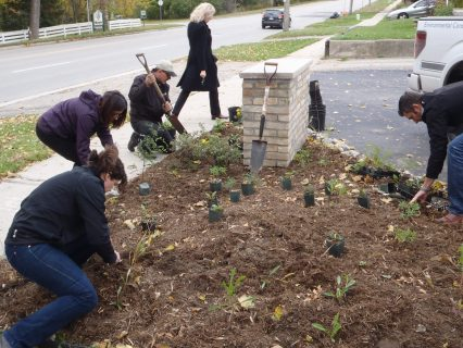 AET employees planting a rain garden at the head office in Kitchener.