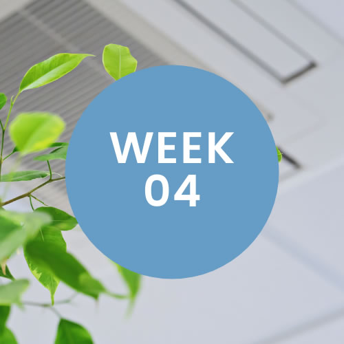 """Green plant in office. A blue circle with """"Week 04"""" is in center of photo."""